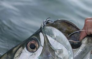 _hooks_fish